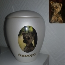pet urns with photo
